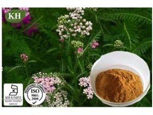 100% Natural Yarrow Extract/Achillea Millefolium Extract pictures & photos