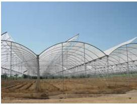 Multi Span Poly Film Greenhouses pictures & photos
