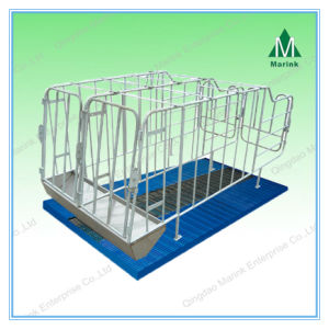Sow Cage/Gestation Stall/Pig Crate Steel Stall/ Plastic Floor pictures & photos