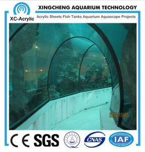 Large Aquatic Tube Tunnel pictures & photos