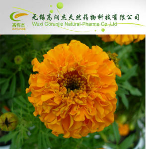 High Quality Hot Sale Marigold P. E -  Lutein on Sell pictures & photos