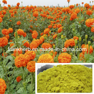 Organic Calendula Powder pictures & photos