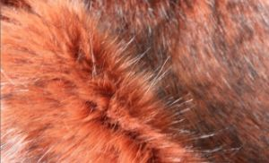 Imitation Fox Fur- Fake Fur Eshp-575-2 pictures & photos