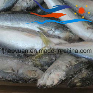 General Size Frozen Pacific Mackerel (PM013) pictures & photos