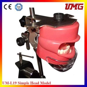 Chinese Dental Supplies Diagnostic Head Phantom From Umg pictures & photos