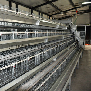 Hot High Quality Automatic Poultry Bird Cages for Layer Broiler Chicken pictures & photos