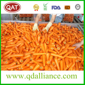 Fresh Carrot with High Quality pictures & photos