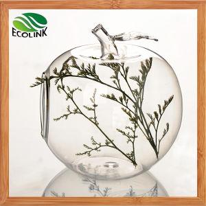Apple and Pear Shape Glass Vases Air Plant Glass Terrarium pictures & photos
