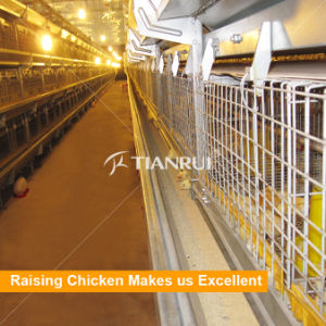 Tianrui Battery Pullet Chicken Cage for Layer Poultry Farm pictures & photos