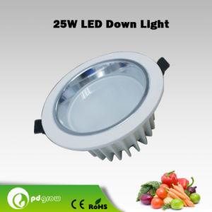 Pd-25W-02 LED Downlight (white SMD, Big COB Down Light)