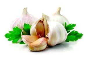 Fresh Pure White Garlic pictures & photos