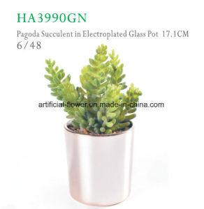 Home Decoration Artificial Plants Plastic Plants pictures & photos