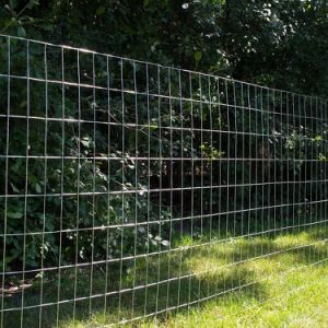 Premium Galvanized Steel Welded Wire Garden Fence pictures & photos