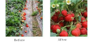 Water Soluble Secondary Element Fertilizer pictures & photos