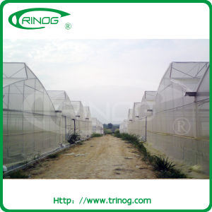 Fixed Roof Vent Plastic Film Greenhouse for commercial pictures & photos
