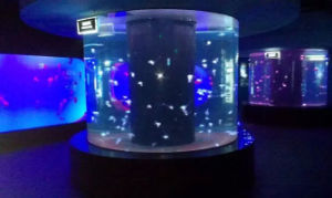 Round Glass Aquarium Acrylic Fish Tank pictures & photos