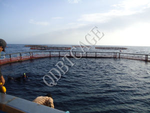Professional Supplier of Fish Cage/Aquaculture Fish Farming Cages/Aquaculture Net Cage pictures & photos