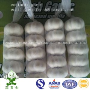 200gram Pure White Garlic Small Packing in 10kgs Carton