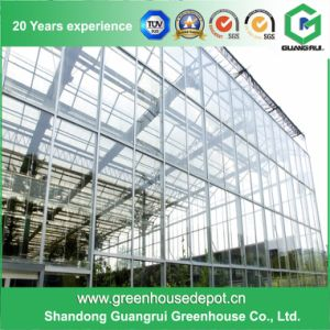 China Supplier Low Cost Glass Greenhouses for Commercial and Production pictures & photos