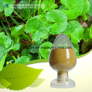 Gotu Kola Extract Natural Asiatic Acid Powder pictures & photos