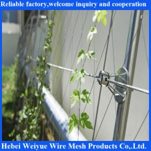 Hand Made Soft Stainless Steel Climbing Plant Support Mesh pictures & photos