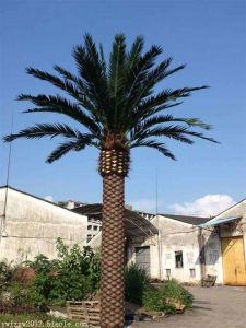 Artificial Phoenix Palm Tree for Indoor or Outdoor Use of pictures & photos