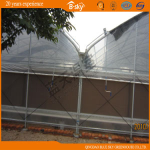 Multi-Span Film Greenhouse for Planting Vegetables pictures & photos