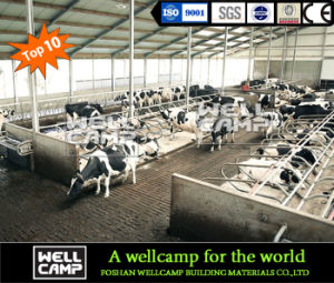 Long Lifetime Steel Frame Steel Structure Cowshed pictures & photos