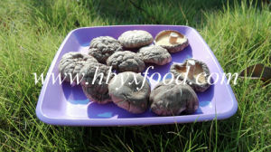 Healthy Fresh Smooth Shiitake Mushroom pictures & photos