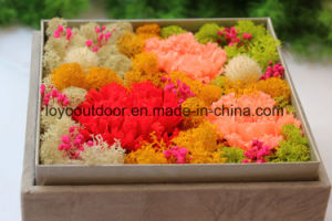Preserved Natural Carnation Handmade Flower Wedding Gift pictures & photos