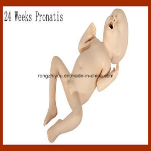 Vivid Medical Nursing Model 24 Weeks Pronatis pictures & photos