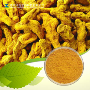 Factory Supply 40-50mesh Ground Powdered Curcuma pictures & photos