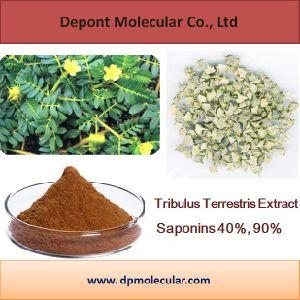 Tribulus Terrestris Extract Saponin 45% -90% UV, Protodioscin 40% HPLC pictures & photos