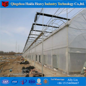 Chinese Supply Venlo Type Commercial Hydroponics Greenhouse pictures & photos