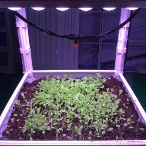 Fruit Seeding LED Lighting with Patented Lens pictures & photos