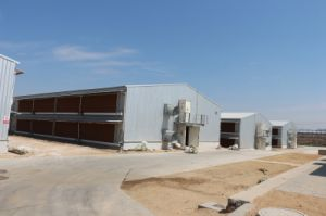 Easy Management Prefabricated Chicken Farm pictures & photos