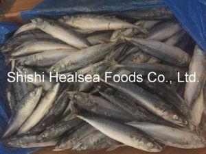 Sea Frozen Pacific Mackerel 200-300g pictures & photos