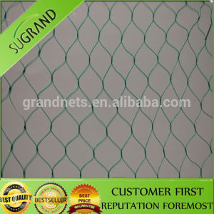 Green Extruding Bird Net Hot Sale in China pictures & photos