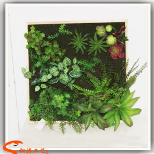 Wall Decoration Artificial Synthetic Succulent Plants Grass Wall Grass pictures & photos