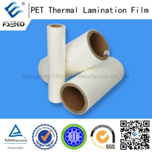 Pet Roll Films at Various Thickness pictures & photos