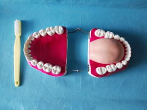 Medical Educational Dental and Teeth Care Model with 28 Teeth pictures & photos