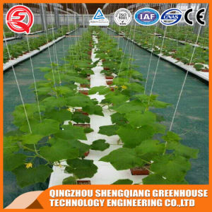 Agriculture Film Green House for Vegetables/Flowers pictures & photos