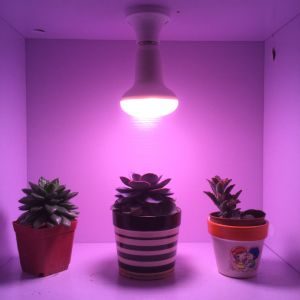 High Quality 9W LED Grow Bulb for Leafy Plants pictures & photos