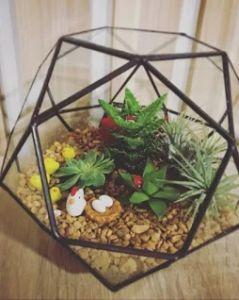 Geometric Pentagon Ball Shape Plants Glass Terrarium Planter pictures & photos