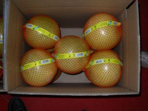 Honey Pomelo Fresh New Crop pictures & photos
