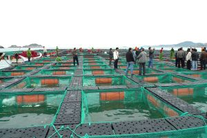 Tilapia Farming Cage Association pictures & photos