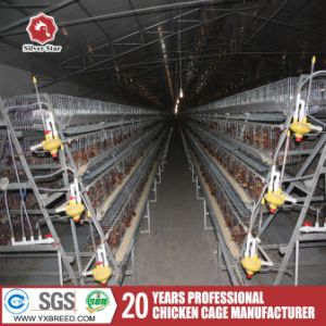 South Africa Best Price Automatic Layer Chicken Cage for Sale pictures & photos