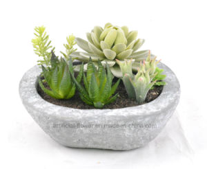 Mixed Succulent Artificial Plant for Decoration of Any Public Places-Home/Office/Bar etc pictures & photos