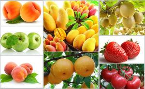 2016 Hot Sale Industrial Juicer Machine / Industrial Fruit Juice Extractor pictures & photos