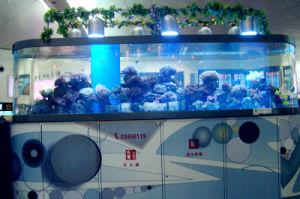 Custom Size, Acrylic Aquarium pictures & photos
